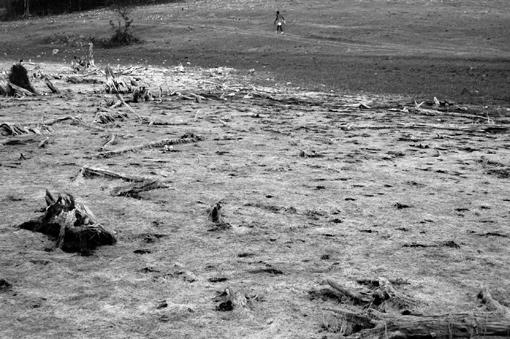 photo: vie-et-mort-du-jogger planche: bois-sec