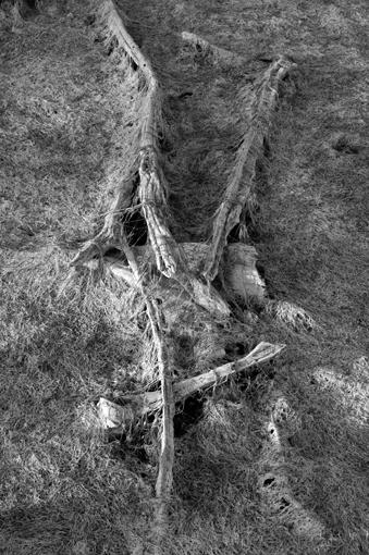 photo: charles-pasqua planche: bois-sec