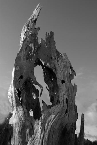 photo: napo-leon planche: bois-sec