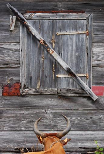photo: bois planche: forme