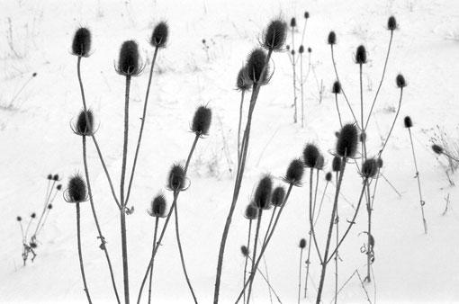 photo: sombernon planche: bourgogne
