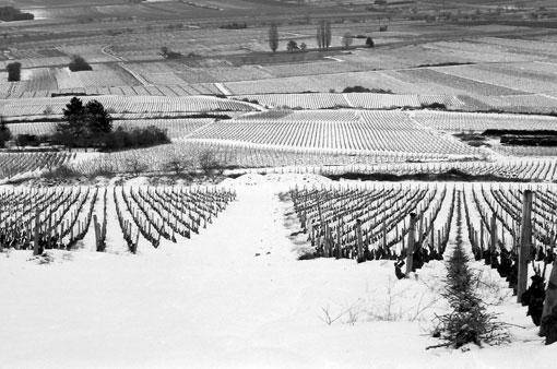 photo: gevrey-chambertin planche: bourgogne