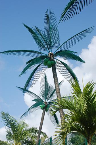 photo: leurre planche: cocotier