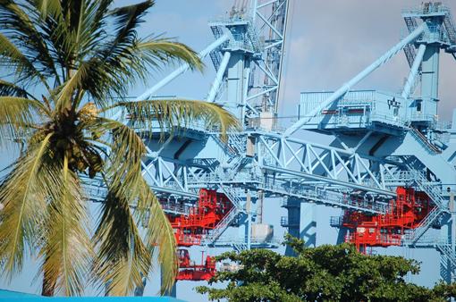photo: import planche: cocotier