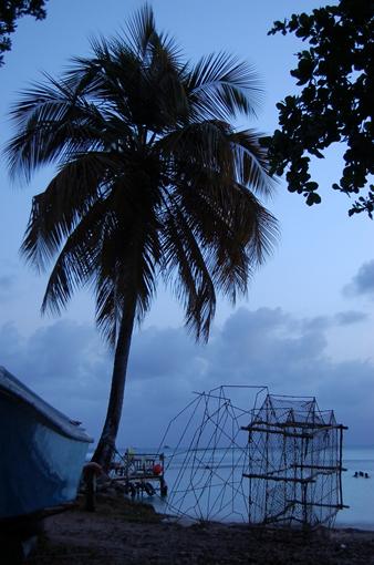 photo: bleu planche: cocotier