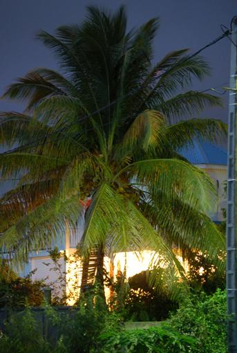 photo: vue-sur planche: cocotier
