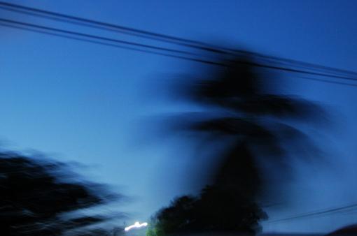 photo: vent planche: cocotier